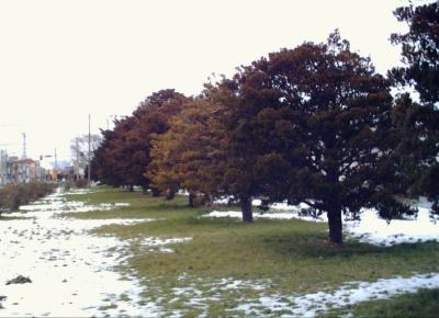 1月1日外の景色.JPG