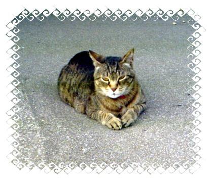 7月12日猫発見.JPG